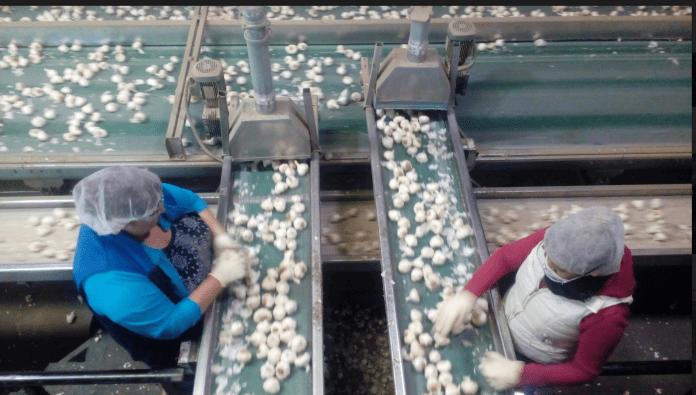 Christopher Ranch endorses tariffs on Chinese garlic